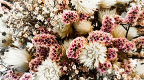Romantic pink and white flowers royalty free stock photography
