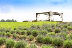 Romantic place with pergola beside lavender field Royalty Free Stock Photography