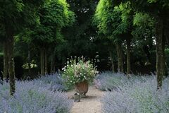 Free Romantic Planting - Cothay Manor Garden, Somerset, UK Stock Photography - 183430452