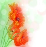 Romantic Poppies And Bokeh Royalty Free Stock Image
