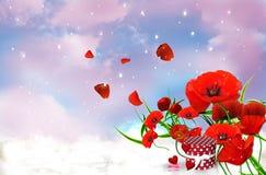 Romantic Poppyes Stock Photos