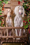 Romantic portrait of two dogs Stock Image