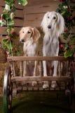 Romantic portrait of two dogs Stock Photo