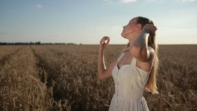 Romantic pretty woman standing in wheat field stock video