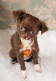 Romantic puppy dog Royalty Free Stock Photography