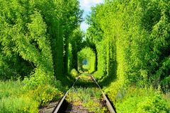 Romantic railway tunnel in the trees. Beautiful romantic railway tunnel in the trees with sunspots Royalty Free Stock Photos