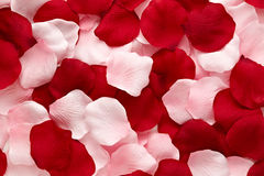 Romantic red and pink rose petals. Romantic background of delicate red and pink rose petals in a random arrangement for your Valentine or anniversary wishes Royalty Free Stock Photo