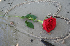 Romantic Red Rose Stock Images
