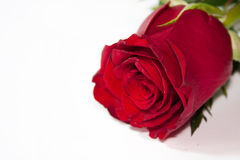 Romantic red rose Royalty Free Stock Images