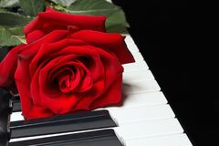 Romantic red rose on keyboard of the piano on black background Stock Photo