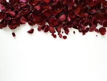 Romantic red rose petals on white background. Decoration Red rose petals on white background, Empty space for design, wedding concept royalty free stock photography