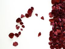 Romantic red rose petals on white background. Decoration Red rose petals on white background, Empty space for design, wedding concept stock image
