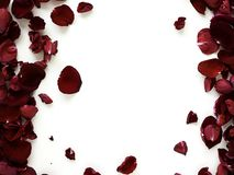 Romantic red rose petals on white background. Decoration Red rose petals on white background, Empty space for design, wedding concept royalty free stock photos