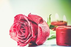 Romantic Red Rose Theme Royalty Free Stock Photos