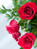Romantic red roses Stock Photography