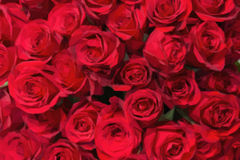Romantic red roses background in low poly style. Royalty Free Stock Image