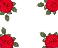 Romantic red roses flower , isolated on white background. Romantic red roses flowers , isolated on white background royalty free stock photography