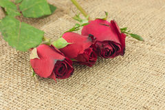 Romantic Red Roses On Sackcloth Vintage Background. Stock Images