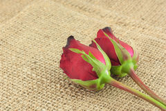 Romantic red roses on sackcloth vintage background. Romantic fresh red roses on sackcloth vintage background Stock Photo
