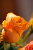 Romantic Rose 2 Stock Images