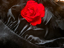 Romantic Rose, Boa and Satin Stock Images