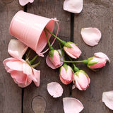 Romantic rose Stock Photography