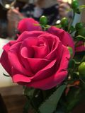 Romantic Rose in the evening. Beautiful rose in dim lighting; shows romance at dinner time stock photo