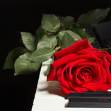 Romantic rose on the keys of the piano on black background Royalty Free Stock Image