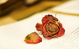 Romantic. Rose on open book. Romantic picture of dessicated rose on open book Stock Photos