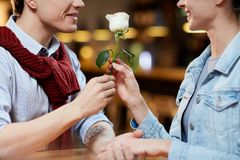 Romantic rose. Romantic guy giving white rose to his girlfriend as symbol of pure love Royalty Free Stock Image
