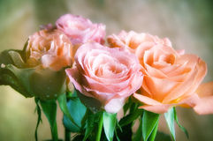 Romantic roses Stock Photography