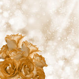 Romantic roses background Royalty Free Stock Photography