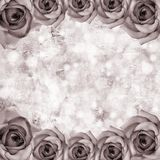 Romantic roses backgrounds Royalty Free Stock Photos