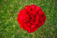 Romantic roses over grass Stock Photo