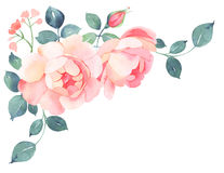 Romantic roses watercolor bouquet Stock Image
