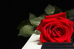 Romantic scarlet rose on keyboard of the piano on black background Stock Photo
