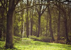 Romantic scene of a swing hanging from tree branch Royalty Free Stock Images