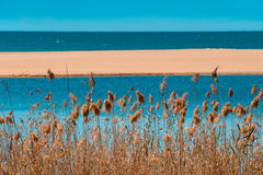 Romantic seaside: dry grass by the empty beach Royalty Free Stock Images
