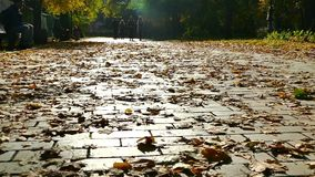 Romantic season is autumn. The road is strewn with yellow foliage. stock video footage