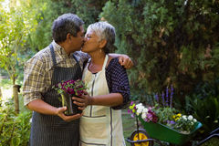 Romantic senior couple kissing each other. In garden Royalty Free Stock Images