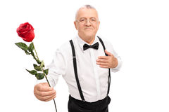 Romantic senior gentleman holding a red rose. Romantic senior gentleman handing a red rose flower towards the camera isolated on white background Royalty Free Stock Photo