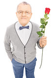 Romantic senior gentleman holding a rose and looking at camera Stock Images