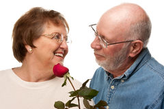 Romantic Senior Husband Giving Red Rose to Wife Royalty Free Stock Photography