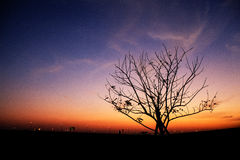 Romantic silhouette. Stock Image