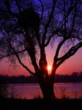 Romantic sky and clouds at sunrise in winter with silhouette of trees and beautiful sun. Close-up of bright sun rising in the middle of branches of a tree in an stock photo