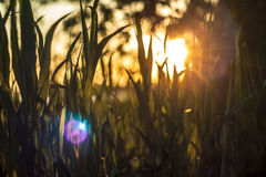 Romantic soft and blurry summer nature background Stock Photos