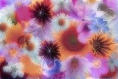 Romantic soft flowers wallpaper Stock Images