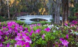 Romantic Southern Garden of Azaleas Charleston SC. A romantic southern garden of pink magenta and white azaleas in spring bloom with an ornamental long white royalty free stock photos