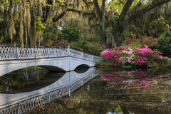 Romantic Southern Garden Stock Photography
