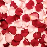Romantic or spa background of red and pink rose petals. Tinted.  stock images